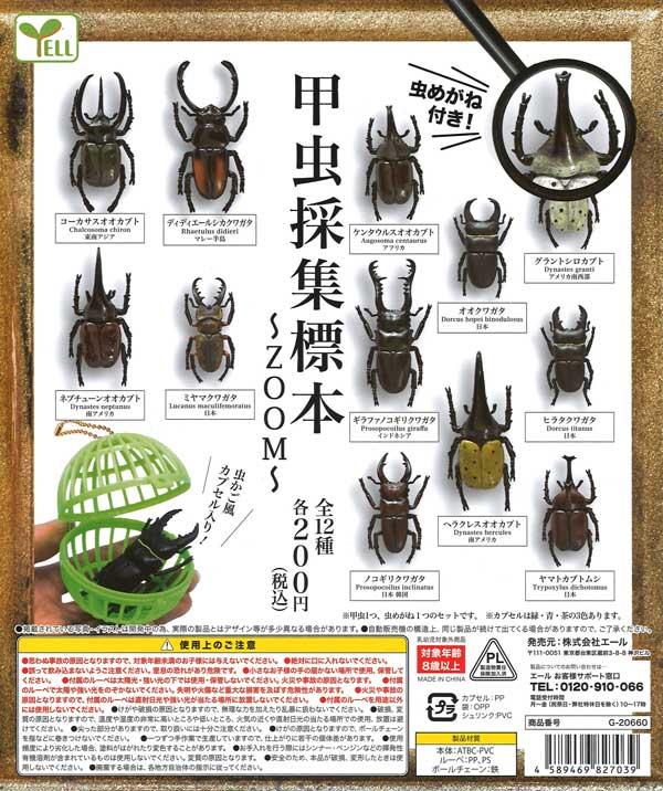 甲虫採集標本 〜ZOOM〜 (50個入り)
